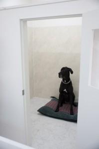 大型犬用ホテルスペース